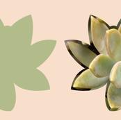 Succulent Cushion - 1