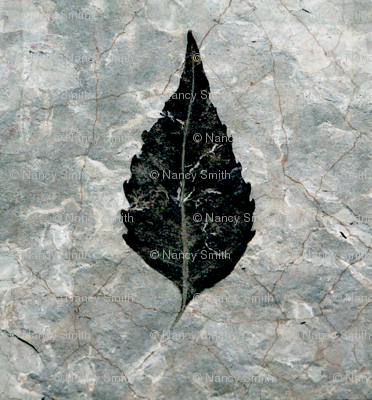 Giant Black leaf fossil