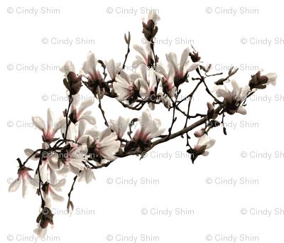 magnolia-flower