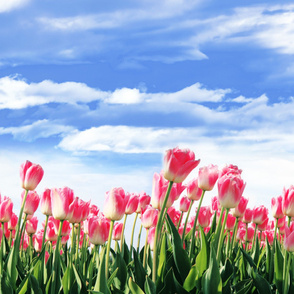 Border Print Tulip Field Pink
