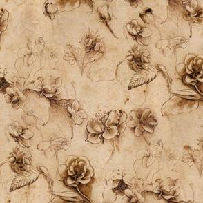 Leonardo da Vinci - Flower Study
