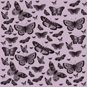 Rmd_butterflies_pretty_pink_shop_thumb