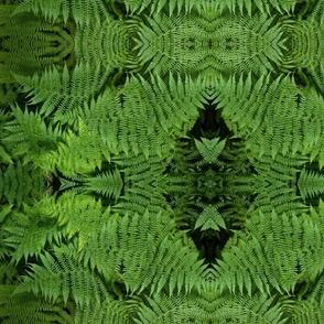 Mirrored Fern