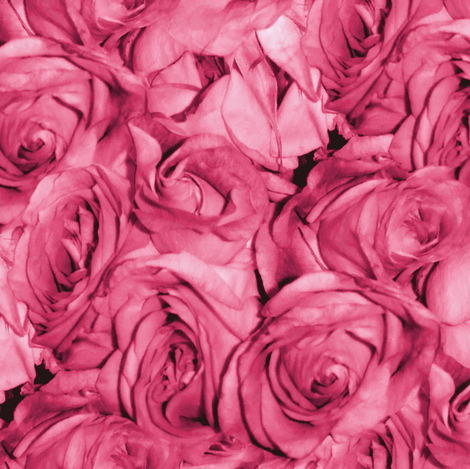 Bubblegum Rose fabric by peacoquettedesigns on Spoonflower - custom fabric