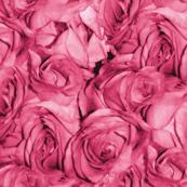 Bubblegum Rose