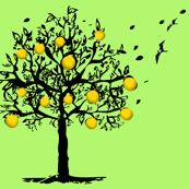 Orange-tree-orchard