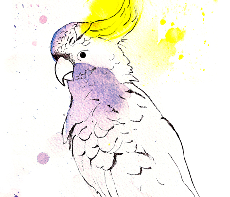 Rrrrcockatoo_design_with_claw_comment_251959_preview