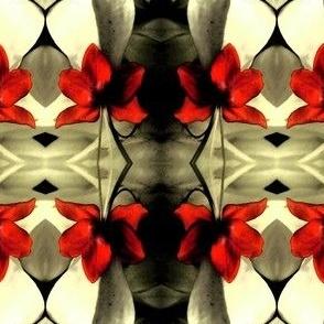 Clerodendron Thomsonae Dark
