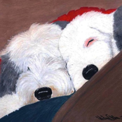 Old English Sheepdog-Brothers