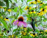 Rrhummingbird12_thumb