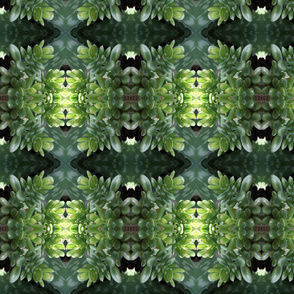 Green Succulents_1290