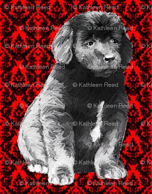 brocade_newfoundland_puppy_