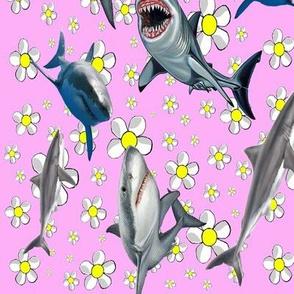 Feminine Sharks