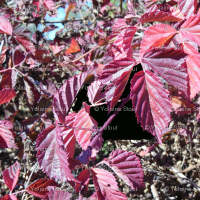Blackberry leaves in the fall - mirror