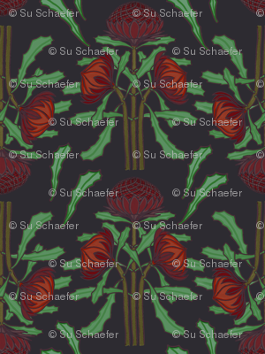 Dark red waratahs on dark gray by Su_G