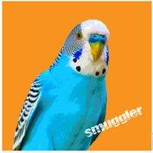 Budgie_smuggler.ai_shop_thumb
