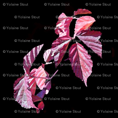 Autumn pink blackberry leaves in wreaths