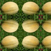 Rrcantaloupe_shop_thumb