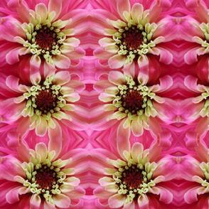 Bright Pink Zinnia
