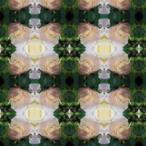 Rose Blossom - Pink Hue