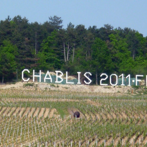 Chablis Wine Landscape, France