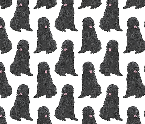 Sitting Black Russian Terriers