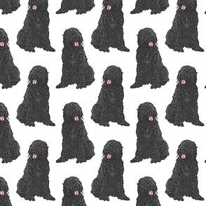 Sitting Black Russian Terriers