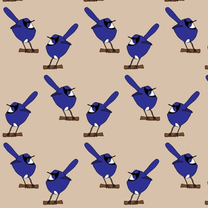 Fairy Wrens
