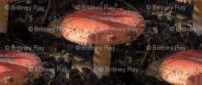 Mushroom in the Dirt