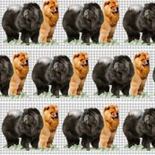 Rred_and_black_chows_shop_thumb