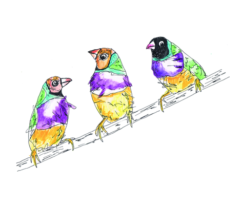 Lady Gouldian finches fabric by cbronsky on Spoonflower - custom fabric