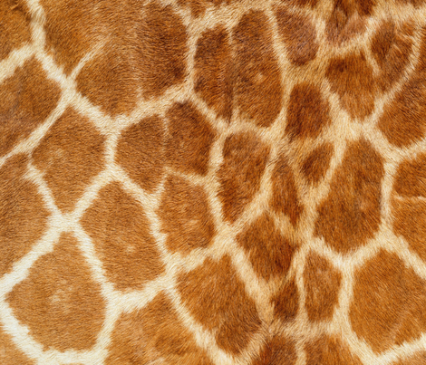 GIRAFF PRINT fabric by bluevelvet on Spoonflower - custom fabric