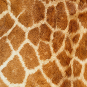 GIRAFF PRINT