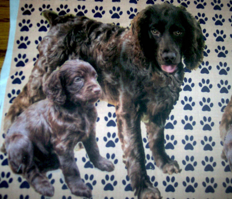 Rrboykin_spaniels_more_red_comment_262039_preview