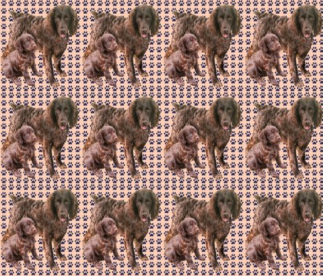 Rrboykin_spaniels_more_red_shop_preview