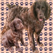Rrboykin_spaniels_more_red_shop_thumb