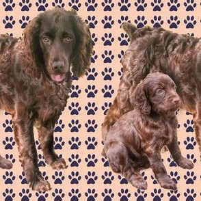 Boykin Spaniel Mother and pup fabric