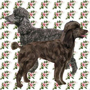 poodles on floral fabric