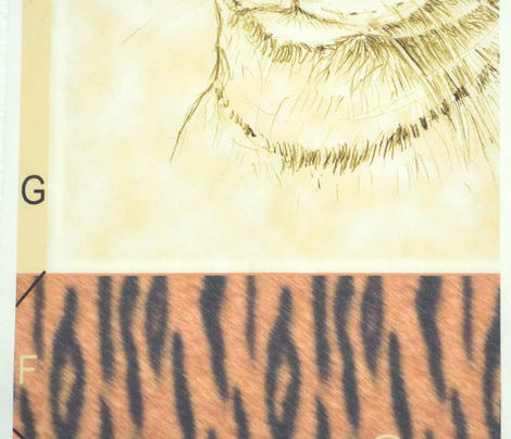 Tygr Pillow