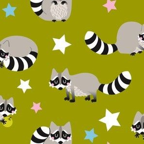 raccoon w...