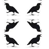 Rrcrow-squawking_shop_thumb