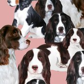 Rrr1738625_rspringer_spaniels_seamless_finished_shop_thumb