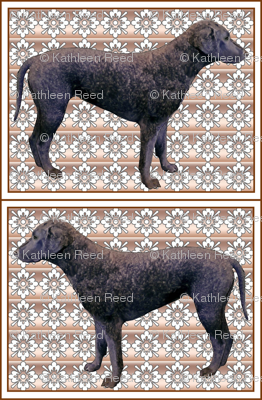 Curlycoated Retriever on brocade fabric