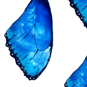 Colourful Wings - Morpho