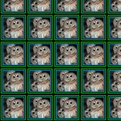Owls-150_ed_shop_thumb
