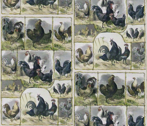 Chickens fabric by jabiroo on Spoonflower - custom fabric