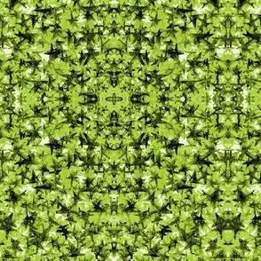Super Stars in Green