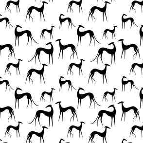 Sighthounds black white