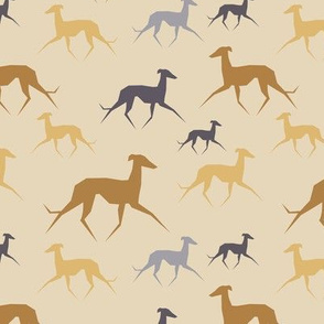 Italian Greyhound beige