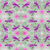 Rbluejay_three_fancier_saturated_pink_green_shop_thumb